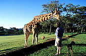 Kenya, region de Nairobi, le Manoir aux Girafes, ou Bryony et Rick Anderson veulent sauver un groupe de girafes de Rotschild