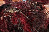Italy, Sicily, Stromboli island. Lobster on fishing nets.