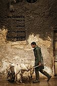 Transporting newly arrived skins into the tanneries, Fes, Morocco