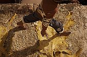 Worker walks across skins drying in the sun, the tanneries, Fes, Morocco
