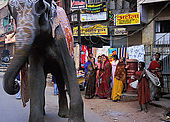 Elephant walking the streets of Varanasi.