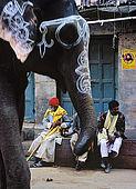Elephant walking the streeys of Varanasi.