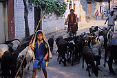 A young shepherd with his herd and a buddhist monk are just two of the characters you can find on the streets of Varanasi's neighborhood of Sarnath, where the Buddha once started his predication.