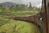 Train passing through the lush tea plantations of Nuwara Eliya, Central Province, Sri Lanka.