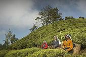 Tea pickers pose for a photo in the Tea Factory Hotel's plantations, Nuwara Eliya, Central Province, Sri Lanka