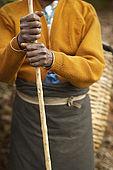Tea picker holding cane, Tea Factory Hotel plantations, Nuwara Eliya, Central Province, Sri Lanka