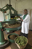 Dried leaves are ground into particles in the Tea Factory Hotel's mini tea factory, Nuwara Eliya, Central Province, Sri Lanka