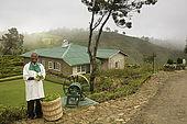 Tea plantation manager holding tea leaves, tea plantation, Nuwara Eliya, Central Province, Sri Lanka, Ceylon.