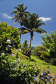 Giardino a Cafeiere Buausejour, Acomat, 97116 Pointe Noire, Guadeloupe (Basse Terre), French West Indies. tel: 0590 981009