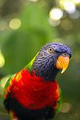 Pappagallo al Giardino Botanico, Deshaies, Guadeloupe (Basse Terre), French West Indies. tel: 0590 284302