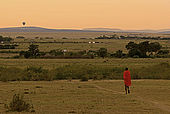 Masai walking at dawn in the savanna with a hot-air balloon on the horizon which is offering tourists a panoramic view of the sunrise over the National Reserve