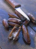 Balkan, Adriatic sea coast    Republic of Montenegro    Perast in Bay of Kotor    mussles