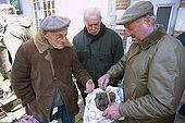 France, Lot, Quercy region village Lalbenque producteur de truffes vendant sa récolte au marché du mardi editorial only