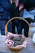France, Lot, Quercy region village Lalbenque marché du mardi truffes encore couvertes de terre editorial only