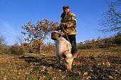 France, Lot, Quercy région vers le village Lalbenque producteur de truffes, recherche de truffes en janvier avec un cochon. Alain Oulié model release OK.