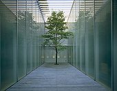 Single tree growing in enclosed decked space