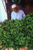 Mint seller, Dades Valley, Morocco