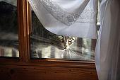 Cat looking through a window at Maso Doss, Pinzolo, Trentino, Italy. Tel 0465 502758