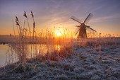 England, Suffolk, Herringfleet. A misty sunrise over hoar frosted reeds and Herringfleet Windmill in Suffolk.