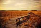 Wooden Walkway Through Marsh