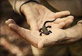salamander in hand