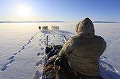 Danemark, Groenland, Scandinavie, Qaasuitsup - Inuit and his dog sled team near Qaanaaq