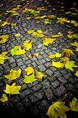Herbstlaub auf Kopfsteinpflaster
