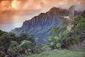 Hawaii, Kauai, Na Pali Coast, Kalalau Valley and Kaaalahina Ridge, view from Kokee State Park lookout with bird flying through foreground