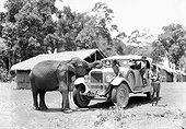 Image Exclusive * La Croisiere Jaune, au Viêt-nam, un enfant assis sur une autochenille carresse un éléphant tandis qu'un autre est debout pendant qu'un homme adulte les surveille entre 1931 et 1932.