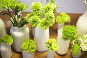 Cut Flowers in Vases