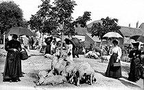 Roger-Viollet | 166916 | Pig fair. Argenton-sur-Creuse (France), circa 1900. | © CAP / Roger-Viollet