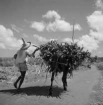 Roger-Viollet | 176191 | MARTINIQUE - TRANSPORT FROM THERE SUGAR CANE | © Hélène Roger-Viollet / Roger-Viollet