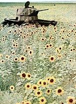 Roger-Viollet | 196358 | Guerre 1939-1945. Opération Barbarossa (invasion de l'URSS par la Wehrmacht). Char T34 de l'armée russe abandonné dans un champ de tournesols, 1942. | © Bilderwelt / Roger-Viollet
