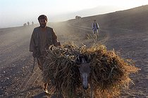 Roger-Viollet   205220   Second war in Afghanistan between the USA and the Northern Alliance against the Taliban following the September 11, 2001 attacks. Farmer in the no-man's-land to the south of Jabal-Saraj. Afghanistan, September-October 2001.   © Jean-Paul Guilloteau / Roger-Viollet