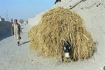 Roger-Viollet   207994   Second war in Afghanistan between the USA and the Northern Alliance against the Taliban following the September 11, 2001 attacks. Farmer carrying straw with his donkey near Khwadja Bahauddin, city where the Commander Ahmad Shah Massoud has been killed. Afghanistan, September-October 2001.   © Jean-Paul Guilloteau / Roger-Viollet