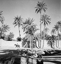 Roger-Viollet | 209919 | Gaston, Paris (1903-1964). Afrique : El Goléa et Colomb-Béchar (Algérie). négatif sur support souple en nitrate de cellulose. [s. d.]. Bibliothèque historique de la Ville de Paris. | © Gaston Paris / BHVP / Roger-Viollet
