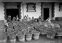 Roger-Viollet | 224309 | Grape harvest in the Champagne region (Möet et Chandon). France, 1941. | © LAPI / Roger-Viollet