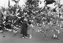 Roger-Viollet | 251343 | Pigeons taking off. Paris, around 1980. | © Jean-Pierre Couderc / Roger-Viollet