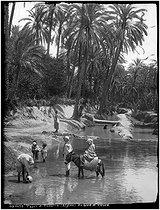 Roger-Viollet | 284540 | Wadi bank | © Etienne Neurdein / Roger-Viollet