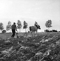 Roger-Viollet | 286246 | Farmer plowing. France, 1966. | © Roger-Viollet / Roger-Viollet
