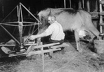 Roger-Viollet | 289024 | Paysan écoutant la TSF pendant la traite d'une vache. Appareil monté sur roues. 1924. | © Jacques Boyer / Roger-Viollet