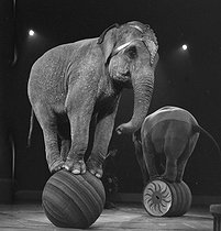 Roger-Viollet | 298785 | FRANCE - ELEPHANTS IN A CIRCUS | © Gaston Paris / Roger-Viollet