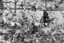 Roger-Viollet | 318297 | Pigeons taking off. Paris, around 1980. | © Jean-Pierre Couderc / Roger-Viollet