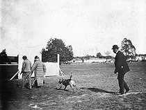 Roger-Viollet | 329727 | Police dogs' training for the struggle against the ruffians, around 1910. | © Roger-Viollet / Roger-Viollet