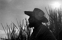Roger-Viollet | 347009 | Fidel Castro (1926-2016), Cuban revolutionary and statesman, cutting the sugar cane. Cuba, 1970. | © Gilberto Ante / Roger-Viollet