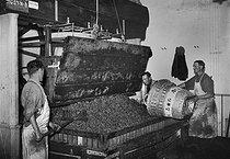 Roger-Viollet | 359006 | Wine press, Moët et Chandon establishments in the Champagn region. 1941. | © LAPI / Roger-Viollet