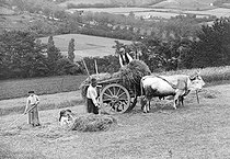 Roger-Viollet | 366137 | Loading a hay cart in the French Basque Country, around 1900. | © Jacques Boyer / Roger-Viollet