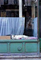 Roger-Viollet | 367772 | Dog in a shop window, rue Piat. Paris (XXth arrondissement), May 1967. Photograph by Léon Claude Vénézia. | © Léon Claude Vénézia / Roger-Viollet