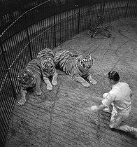 Roger-Viollet | 371707 | Circus : tamer and tiger. France, circa 1935. | © Gaston Paris / Roger-Viollet