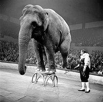 Roger-Viollet | 375039 | Moscow Circus. Elephant and clown. Paris, November 1960. | © Studio Lipnitzki / Roger-Viollet
